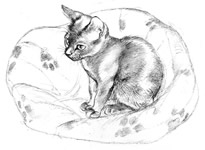 Illustration from The Coach House Cats